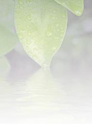 wellness-pond